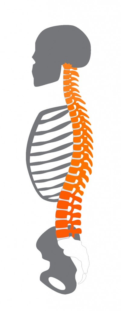 Image of spinal position - Bonfire Chiropractic